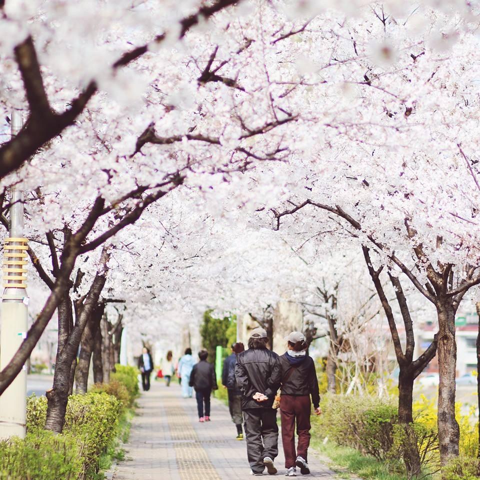 Tuyển sinh đại học Myongji