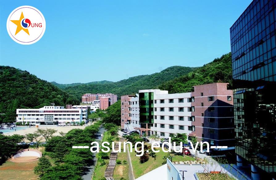 đại học Youngsan Hàn Quốc