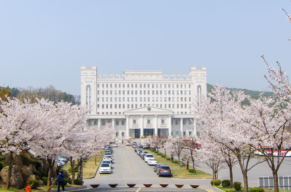 hoa-dao-truong-dai-hoc-kyunghee
